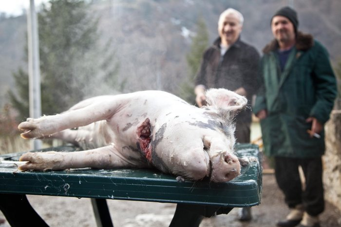 01-matteo-vegetti-bosnia-srebrenica-pig-preparation