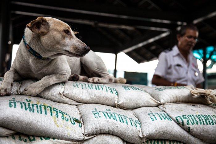 matteo-vegetti-thailand-bangkok-dog