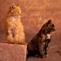 Jordan cats